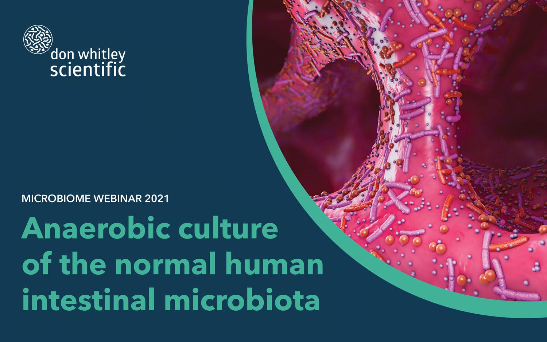 Hodowla beztlenowa normalnej mikroflory jelitowej człowieka